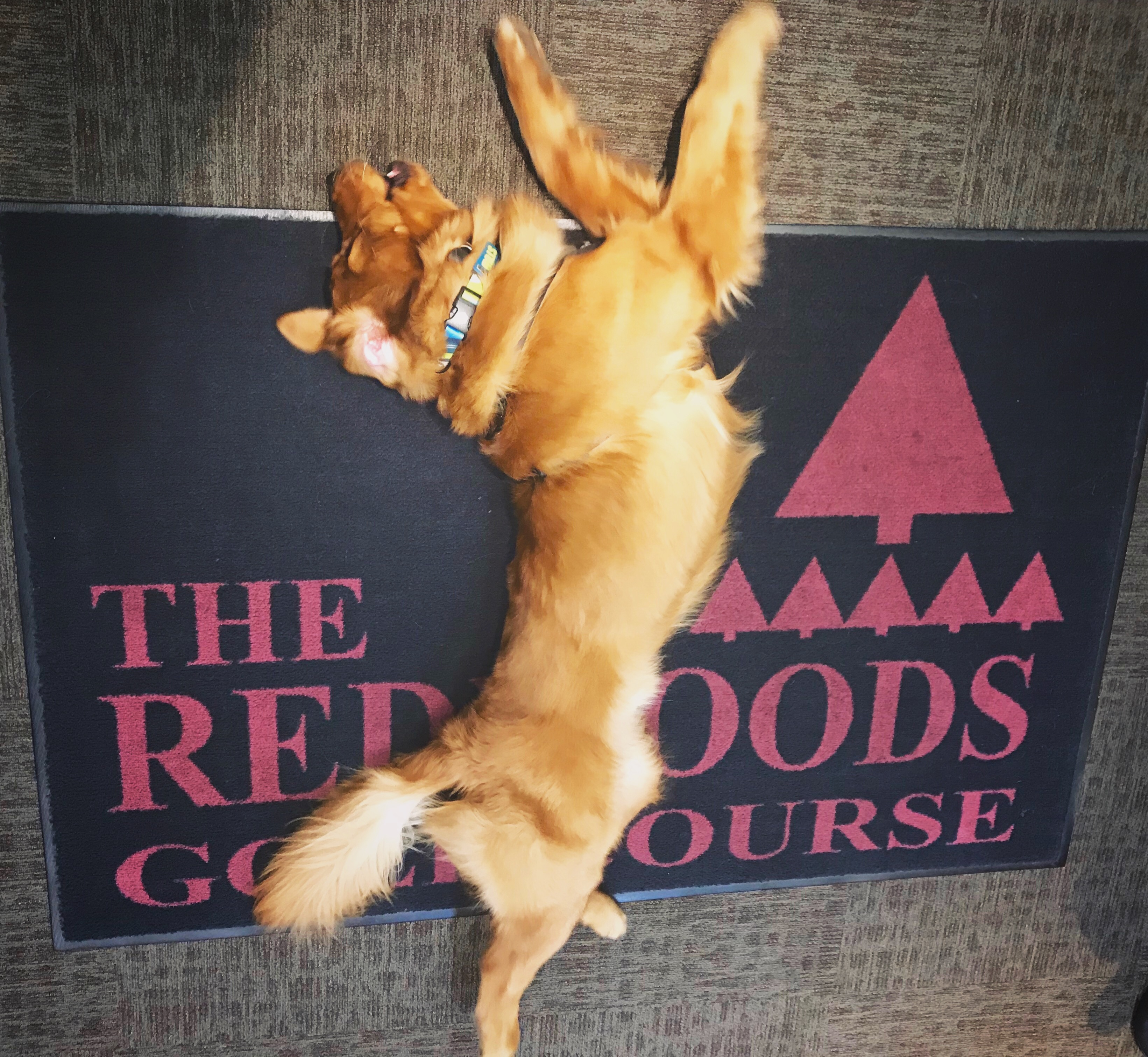Dog laying down on a Redwoods Logo mat